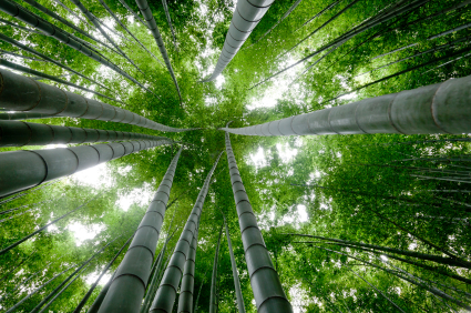 Success Is Like A Chinese Bamboo Tree Verisail Partners